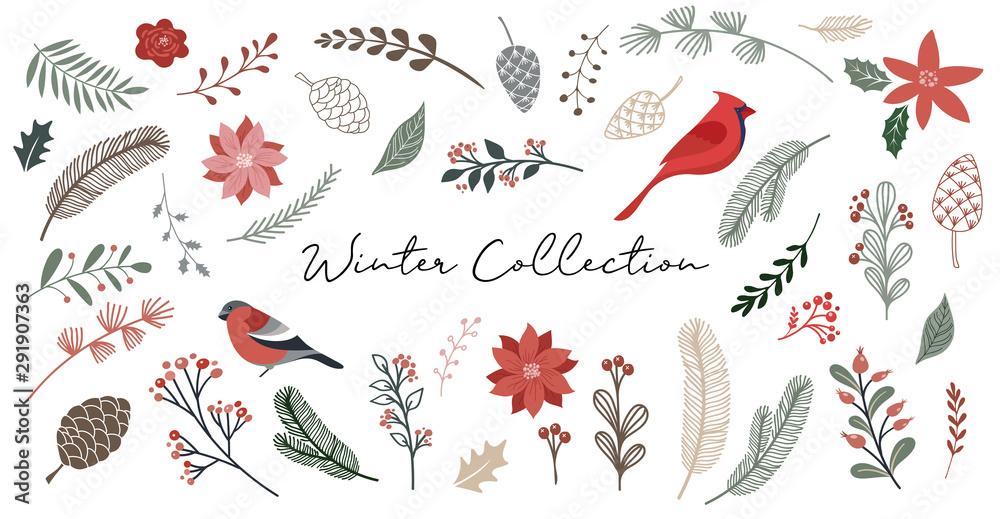 Botaniczne Boże Narodzenie, Boże Narodzenie elementy, zimowe kwiaty, liście, ptaki i szyszki na białym tle.