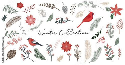 Photo  Botanical Christmas, Xmas elements, winter flowers, leaves, birds and pinecones isolated on white backgrounds