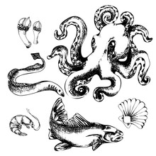 Black And White Sketch On The Inhabitants Of The Seas