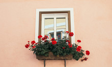 Beautiful Window With Flower Box And Shutters. Pink Wall With Red Flowers
