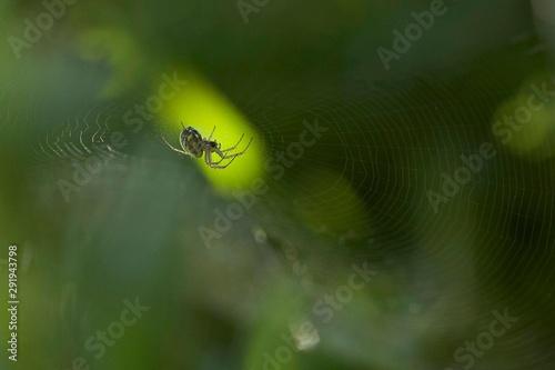 Photo close up de aranha à espera das presas