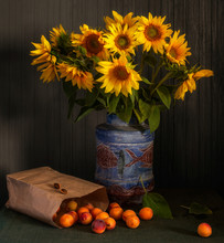Still Life With Ripe Apricots And Sunflower Flowers. Vintage.