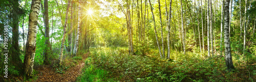 Printed kitchen splashbacks Road in forest birch tree forest in morning