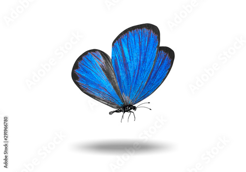 flying colored butterfly with a shadow from below Wallpaper Mural