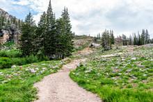Albion Basin, Utah Summer With...