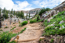 Albion Basin, Utah Green Summe...