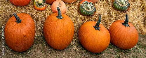 Fotografie, Obraz  Vier orange Kürbisse in einer Reihe