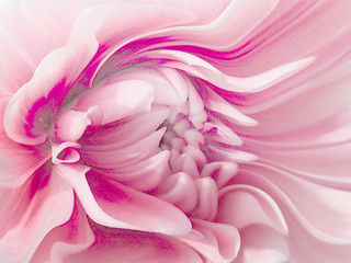 Panel Szklany Peonie Rasborinae a picture of a peony flower. Layered a-line beautiful shades of cream