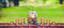 Green Plant Growing On Coin In Glass Jar And Coin Stack On Wood Table In Park With Blur Nature Background.business Financial Banking Saving Concept.investment Profit Income.marketing Startup Success.
