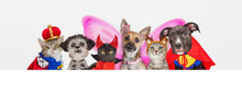 Cute Pets In Halloween Costumes Over Web Banner