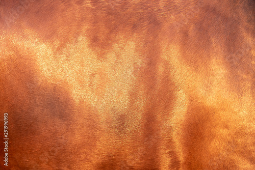 Foto op Canvas Paarden Close up horse skin concept for background