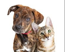 Cute Puppy And Kitten Closeup Looking At Camera