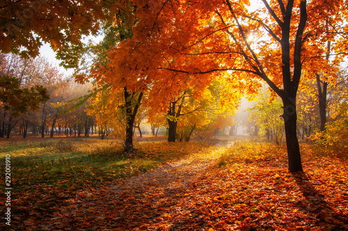 Fototapeta colorful trees and rural road in deep autumn forest, natural background obraz