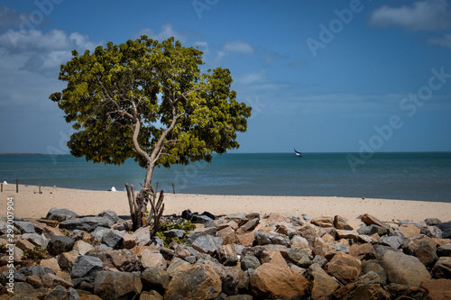 Acrylic Prints Roe ree on the beach