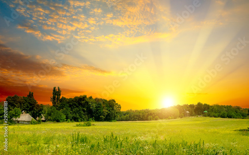 Fototapeta Green field and bright sunset. obraz