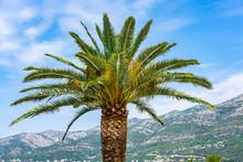 Characteristic Mediterranean Palm Tree, Blue Sky And Croatian Mountains In Background, Dalmatia, Croatia