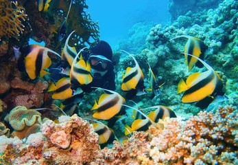 Fototapeta na wymiar Man scuba diver admiring shoal of beautiful Bannerfish near coral reef (Heniochus intermedius)
