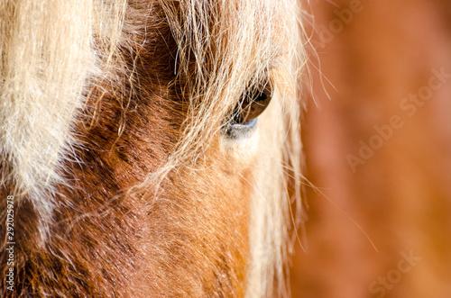 Fototapeta  Pferdeauge im Sonnenlicht