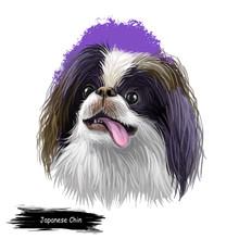 Japanese Chin, Japanese Spaniel, Chin Dog Digital Art Illustration Isolated On White Background. Japan Origin Toy Companion Dog. Pet Hand Drawn Portrait. Graphic Clip Art Design For Web Print.