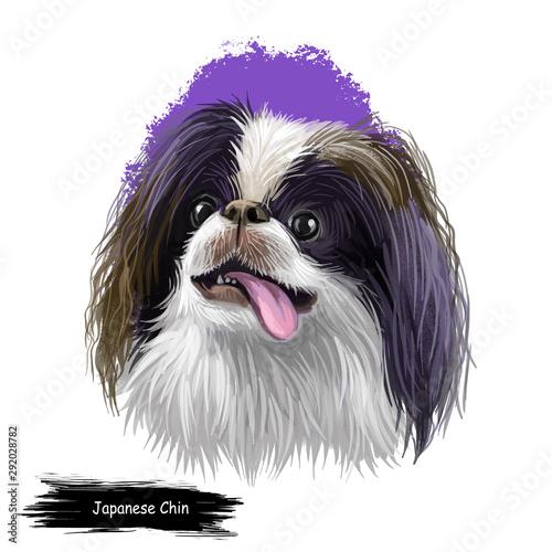 Japanese Chin, Japanese Spaniel, Chin dog digital art illustration isolated on white background Billede på lærred