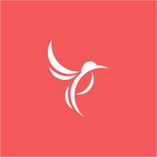 Colibri , Hummingbird Logo Design Graphic Vector Isolated
