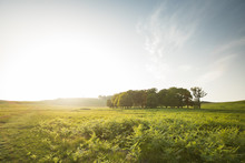 Green National Park In UK