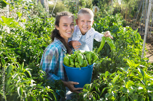 Poster Ecole de Danse Woman with son harvesting peppers