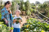 Little son helps mom to harvest vegetables - 292038701