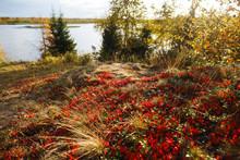 Closeup Of Autumn Of Fall Tund...