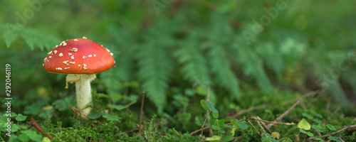 Photo Close up of toadstool mushrooms, fly agaric  on the forest floor, Bavaria, Germa