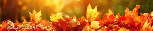 Obraz Goldener Herbst - fototapety do salonu