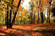 canvas print picture - Goldener Herbst
