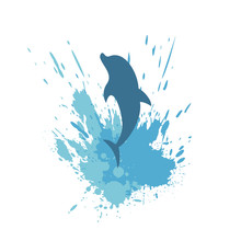 Dolphin Splash Illustration