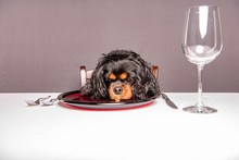 A Cute Dog Stares At Food On A...