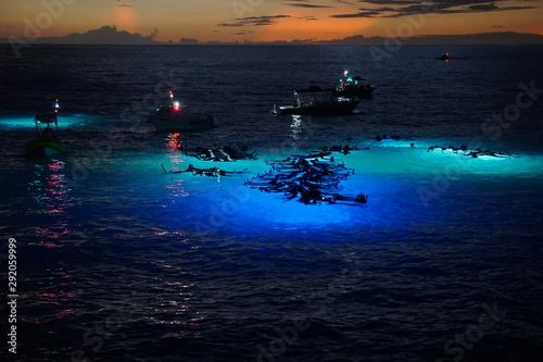 Obraz na plátně Nighttime Manta Ray Viewing off Hawaii's Kona Coast