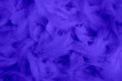 canvas print picture - beautiful purple dark feathers background