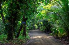 Dirt Road In Costa Rica Jungle