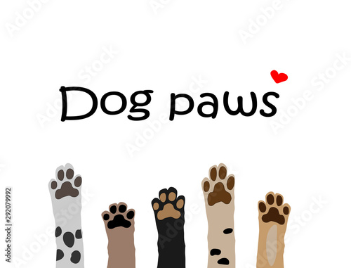 Obraz vector illustration of colorful dog paws on white background. Brochure, flyer, postcard. - fototapety do salonu