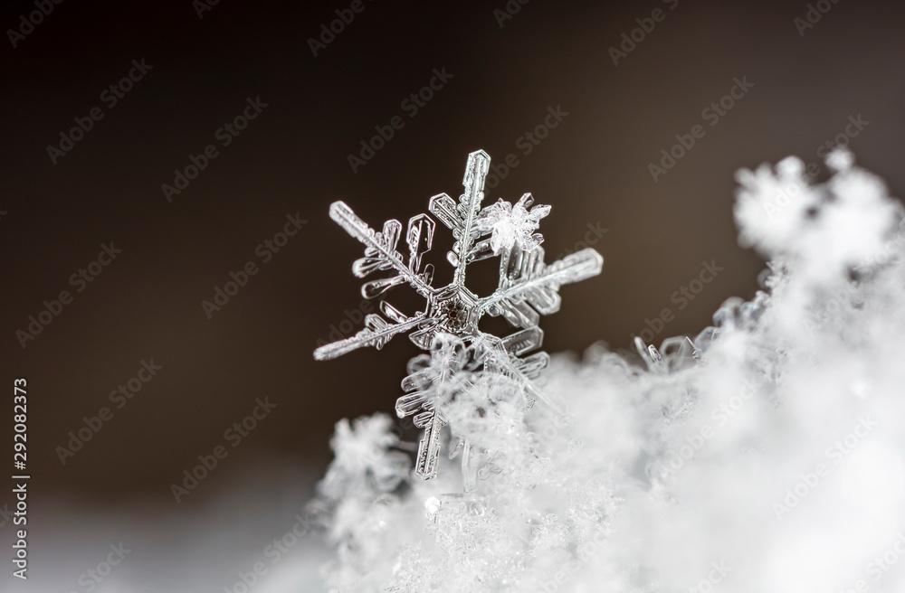 Fototapety, obrazy: snowflake, little snowflake on the snow