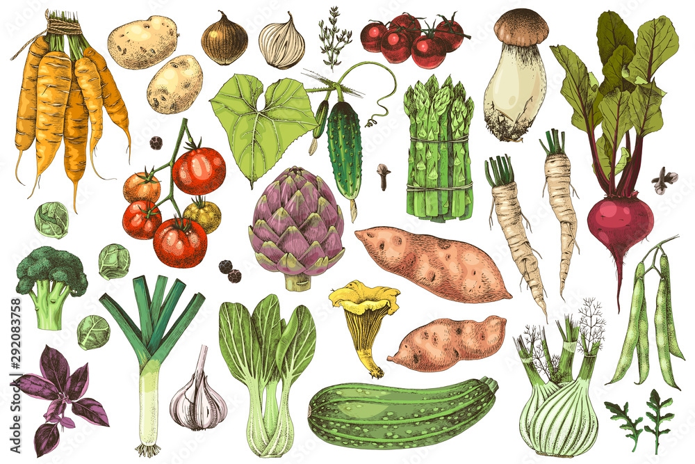 Fototapety, obrazy: Hand drawn vegetables collection