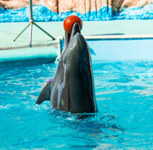 Dolphin Playing In The Water