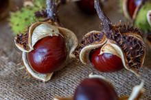 Horse Chestnut At A Natural P...