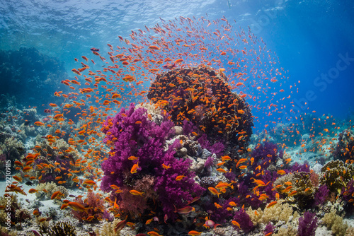Cadres-photo bureau Recifs coralliens Coral reef