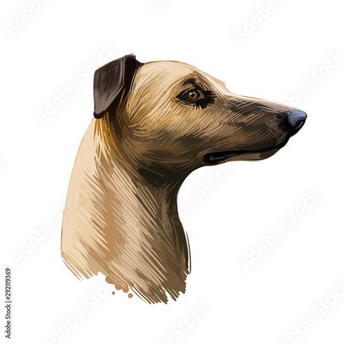 Magyar agar Hungarian breed closeup digital art illustration Canvas Print