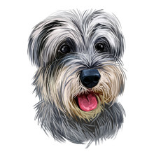 Miniature Schnauzer, Ratting Hound Guarding Dog Zwergschnauzer Digital Art Illustration. German Breed Of Animals Closeup Portrait. Canine Animal With Stuck Tongue, Pet Puppy Having Docked Tail