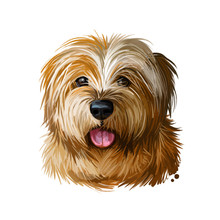 Norfolk Terrier, Watercolor Po...
