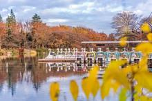 Cute Duck Pedal Boats Floating In The Pond Of Kichijoji Inokashira Park