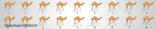 Foto Camel Walk cycle animation sequence