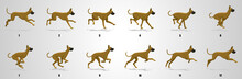 Great Dane Dog Run Cycle Anima...