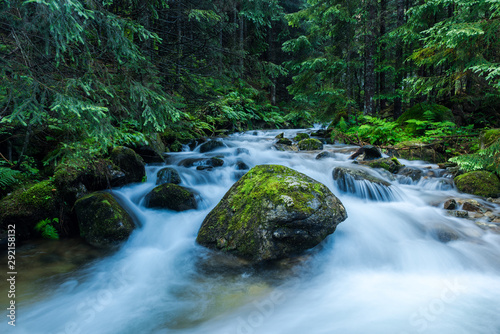 Recess Fitting Forest river Wild River Flows in Ancient Forest, Chocholowska Valley,Poland